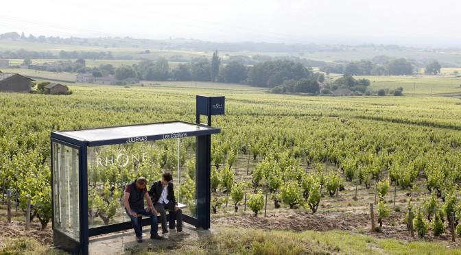 Saint Amour et dégustation de vins